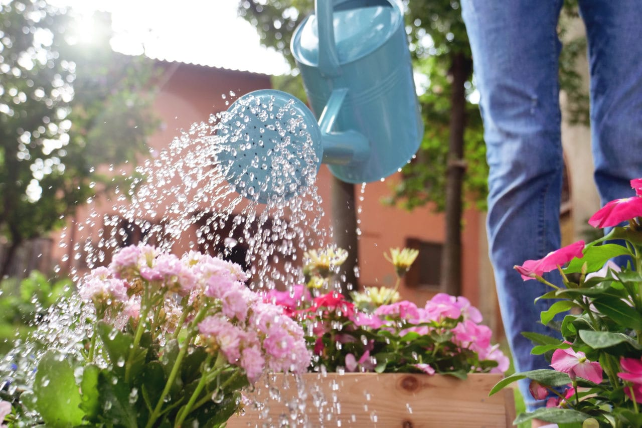 icosawater watering can